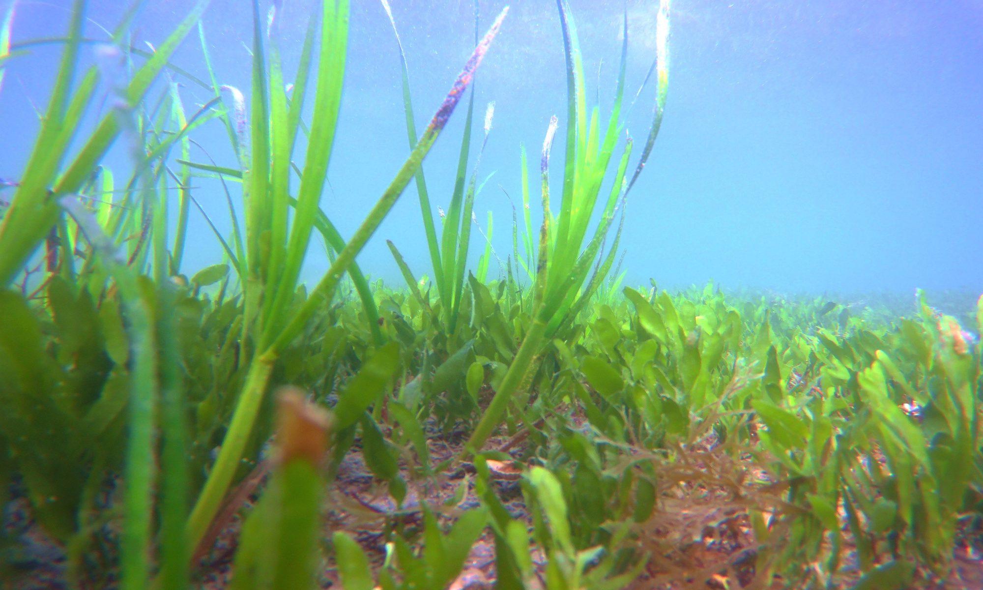 Coastal Marine Ecology Research